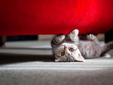 little-cat-playing wallpaper